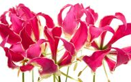Pink Flowers Available In October 23 Free Hd Wallpaper