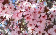 Pink Flowers Available In October 31 Desktop Wallpaper
