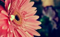 Pink Flowers Background 2 Widescreen Wallpaper