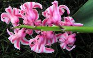 Pink Flowers Beginning With A 19 Widescreen Wallpaper