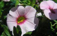 Pink Flowers Beginning With A 32 Widescreen Wallpaper