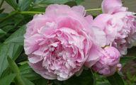 Pink Flowers Bloom Late Summer 32 Hd Wallpaper
