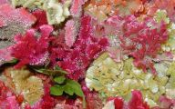Pink Flowers Bloom Late Summer 8 Cool Hd Wallpaper