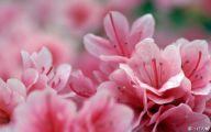 Pink Flowers Bouquet 1 Desktop Background