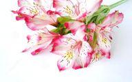 Pink Flowers Bouquet 17 Cool Wallpaper