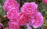 Pink Flowers Breast Cancer 12 Widescreen Wallpaper