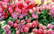 Pink Flowers Bulbs 25 Wide Wallpaper