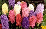 Pink Flowers Bulbs 6 Widescreen Wallpaper