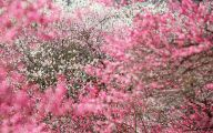 Pink Flowers By Gucci 19 Cool Wallpaper