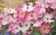 Pink Flowers By Name 11 Free Hd Wallpaper