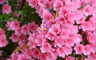 Pink Flowers By Name 5 High Resolution Wallpaper