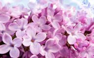 Pink Flowers List 10 Background