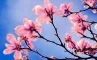 Pink Flowers List 17 Free Hd Wallpaper