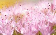 Pink Flowers List 2 Hd Wallpaper