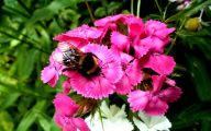 Pink Flowers List 6 Widescreen Wallpaper
