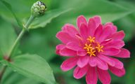 Pink Flowers List 7 High Resolution Wallpaper
