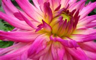 Pink Flowers List 8 Free Hd Wallpaper