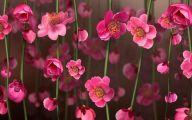 Pink Flowers List 9 Free Hd Wallpaper