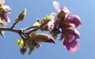 Pink Flowers Perfume 34 Free Hd Wallpaper