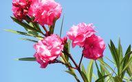 Pink Flowers Perfume 38 Wide Wallpaper