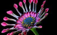Pink Flowers Perfume 43 Background Wallpaper