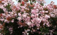 Pink Flowers Pinterest 1 Cool Wallpaper
