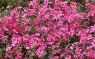 Pink Flowers Pinterest 13 Background Wallpaper