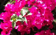 Pink Flowers Pinterest 16 Hd Wallpaper