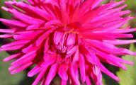 Pink Flowers Pinterest 38 Hd Wallpaper