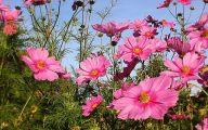 Pink Flowers Pinterest 8 Background