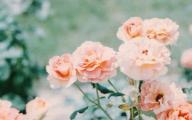 Pink Flowers Tumblr 18 Desktop Wallpaper