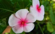 Pink Flowers Tumblr 20 Free Wallpaper