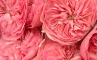 Pink Flowers Tumblr 30 Desktop Wallpaper