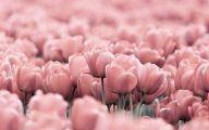 Pink Flowers Tumblr 35 Free Wallpaper