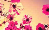 Pink Flowers Tumblr 7 Free Hd Wallpaper