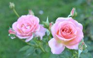 Pink Flowers Tumblr 9 Widescreen Wallpaper