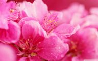 Pink Flowers Wallpaper 26 Free Hd Wallpaper