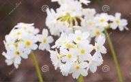 Pretty White Flowers  12 Wide Wallpaper
