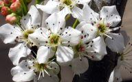 Pretty White Flowers  23 Free Hd Wallpaper