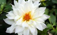 Pretty White Flowers  26 Background