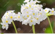 Pretty White Flowers  27 Widescreen Wallpaper