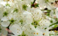 Pretty White Flowers  28 Cool Wallpaper