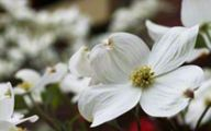 Pretty White Flowers  32 Widescreen Wallpaper