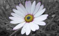 Pretty White Flowers  33 Widescreen Wallpaper