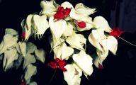 Pretty White Flowers  34 Desktop Background