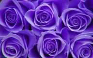 Purple Flowers And Meanings 1 Free Hd Wallpaper