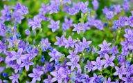 Purple Flowers And Names 2 Cool Hd Wallpaper