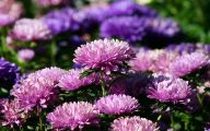Purple Flowers Are Called 25 Free Wallpaper