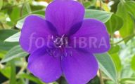 Purple Flowers Are Dominant 5 Free Wallpaper