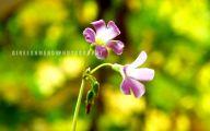 Purple Flowers Available In December 10 Desktop Background